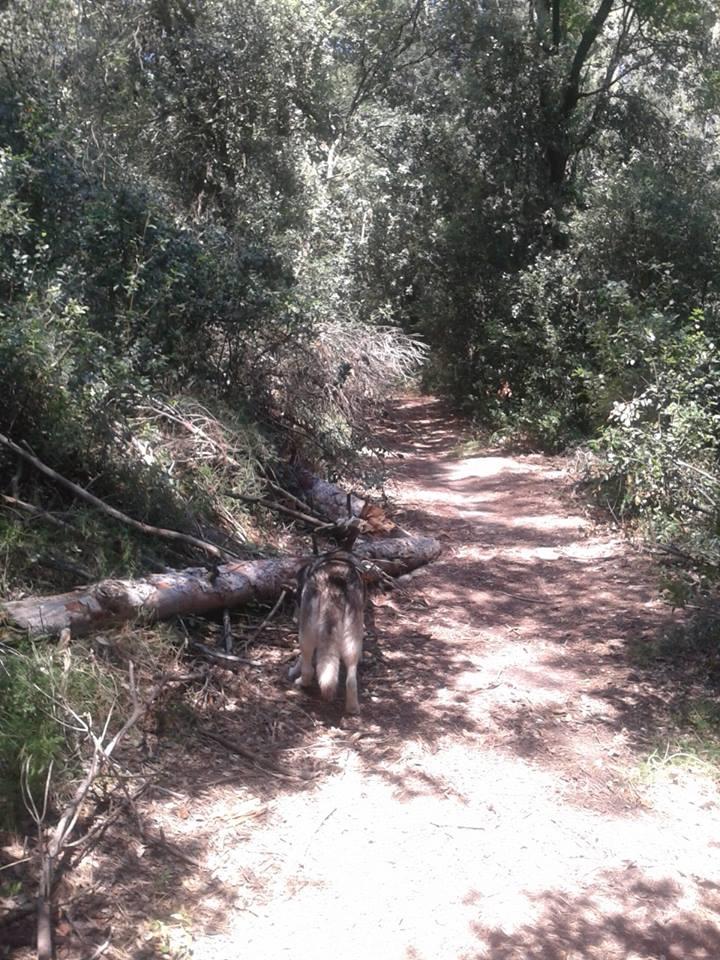 Foto árbol caído bosque